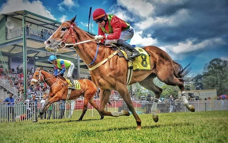 chevaux course hippique